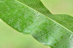 雨叶子 库存图片