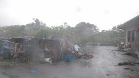 雨吹的树重的风和阵风在房子旁边的在台风期间 股票视频