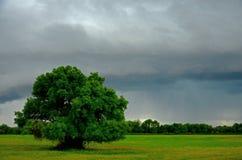 雨和树 免版税图库摄影