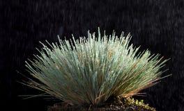 雨和草丛 免版税图库摄影