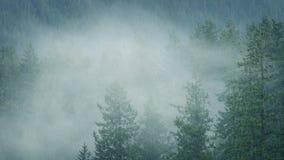 雨和薄雾在原野森林里 股票视频