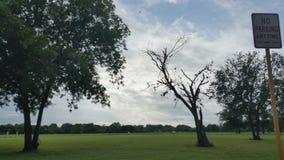 雨在公园 免版税库存照片