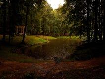 雨在公园 免版税图库摄影