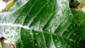 雨在叶子的小滴露水 免版税库存图片