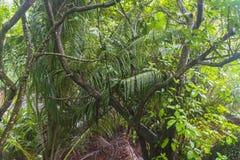 雨在密林,塞舌尔群岛 免版税图库摄影