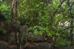 雨在密林,塞舌尔群岛 库存图片