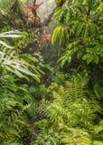 雨在密林 免版税库存图片