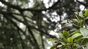 雨在小蜂鸟落在冬天 股票录像