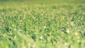 雨在庭院里 库存图片