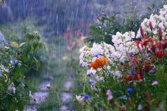 雨在庭院里 免版税图库摄影