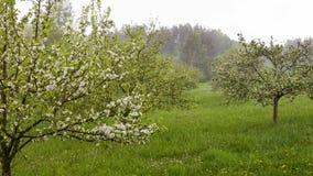 雨在春天庭院里 库存图片