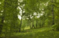 雨在春天桦树树丛里 免版税库存图片
