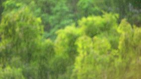 雨在有焦点的森林里在雨 影视素材