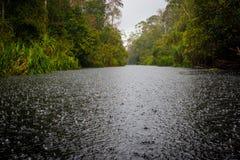 雨在森林里 图库摄影