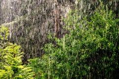 雨在森林里 免版税库存照片