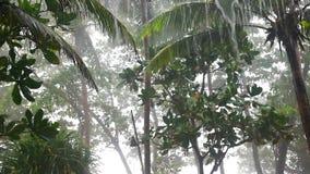 雨在热带庭院里 股票视频