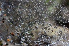 雨在Spiderweb 免版税库存图片