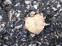 雨天叶子 图库摄影