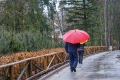 雨天和人们有伞的 免版税库存图片
