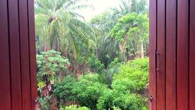 雨天热带密林视图通过木快门 影视素材