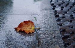 雨天的温暖的颜色 免版税库存照片