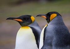 雨夹雪和雪风暴的企鹅国王 免版税库存照片
