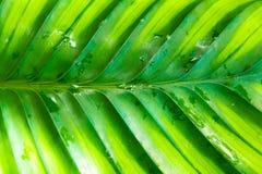 雨林叶子 免版税库存照片