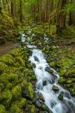 雨林和小瀑布沿Sol Duc秋天足迹 库存图片
