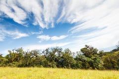 雨林和蓝天 库存照片