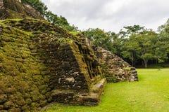 雨林在伯利兹 免版税库存图片