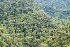 雨林在厄瓜多尔 库存照片