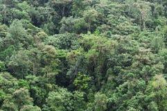 雨林在厄瓜多尔 免版税库存图片
