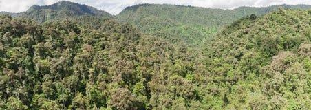 雨林在厄瓜多尔 免版税图库摄影