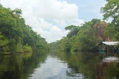 雨林在哥斯达黎加 免版税库存图片