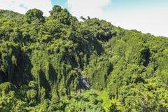 雨林在毛伊,夏威夷的风景视图 库存照片