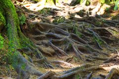 雨林在温哥华岛,不列颠哥伦比亚省,加拿大 图库摄影
