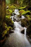 雨林小河 库存图片