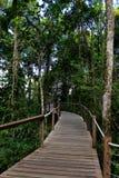 雨林木板走道 免版税库存照片