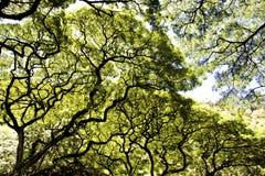 雨林树木天棚场面 免版税图库摄影