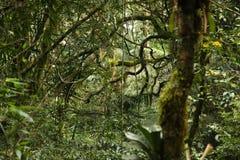 雨林植物群 免版税库存照片