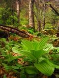 雨林植被 免版税库存图片