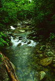 雨林流 库存图片