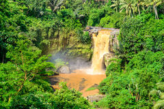 雨林瀑布在巴厘岛 库存照片