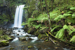 雨林瀑布, Hopetoun落,维多利亚,澳大利亚 图库摄影