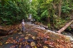 雨林瀑布 库存图片
