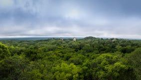 雨林玛雅寺庙全景和上面在蒂卡尔国家公园-危地马拉的 库存照片