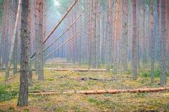 雨林砍伐森林在乌克兰。 库存图片