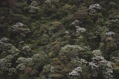 雨林背景 免版税库存照片