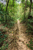 雨林足迹 库存图片
