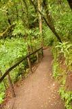 雨林足迹 免版税库存照片